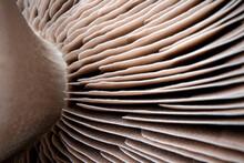 Close Up Of A Mushroom