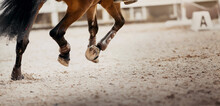 Legs Of A Galloping Horse. Legs Of A Sporting Horse In Knee-caps