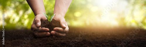 Carta da parati panoramic - man planting a small plant caring for the environment