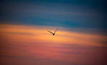 Birds Of Topsail Island