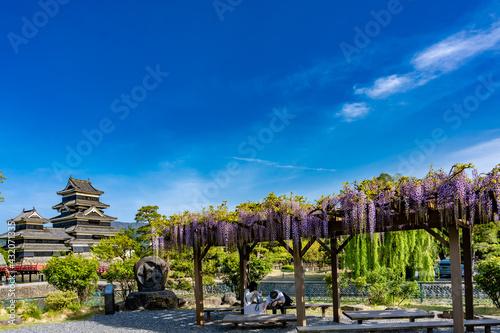 松本城と藤棚 Fototapet