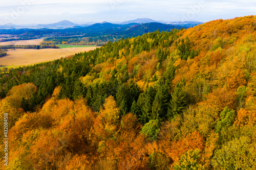 Fototapeta View from drone of undulating forest landscape in sunny autumn day.. obraz