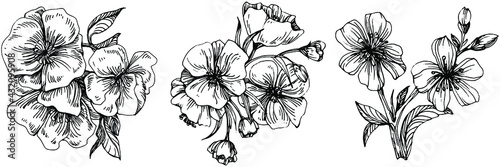 Canvas Print Sakura flower