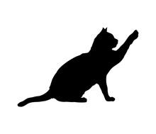 Adult Cat Silhouette. Pet. Try To Reach Or Touch Something.