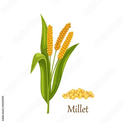 Photo Millet grass cereal crops or grains, agricultural plant vector illustration