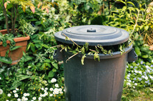 Full Greenery Bin In A Garden. Green Lid Bin With Branches And Leaves Coming Out. Separate Collection And Management Of Garden Waste.