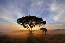Silhouette Of A Mahout Riding A Elephant In A Paddy Field At Sunset, Thailand