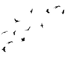Isolated Black Silhouette Of A Flying Flock Of Birds