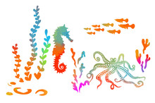Colorful Seahorse Object. Multi-colored Marine Animals. Vector Illustration