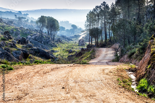 Camino entre los pinos. Madrid. España. Europa Fototapet
