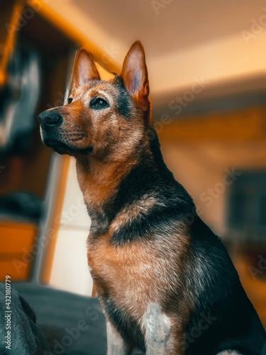 Obraz dog - fototapety do salonu