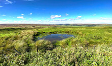 On The Hill Tops, With Wild Plants, Waterlogged Grass, And Distant Moors Near, Beweley, Pateley Bridge, UK