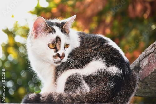 Naklejka premium cat on the wall