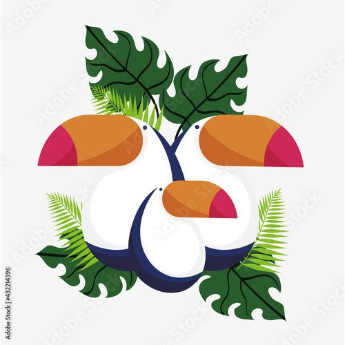 Fototapeta premium toucan family foliage