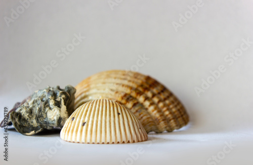 Fotografering Bunch of conch shell of different shapes with naturally formed pattern isolated on white background