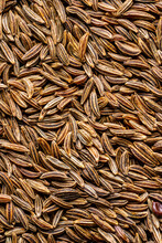 Closeup Of Caraway Seed