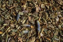 Closeup Of Herbs De Provence