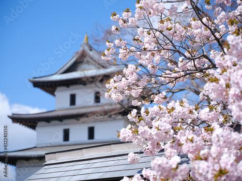 Fotografering 松前城の桜