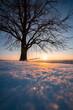 Sonnenuntergang an einem Baum mit Schaukel im Winter