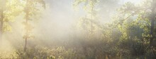 Mysterious Evergreen Forest At Sunrise. Golden Sunlight, Sunbeams, Fog, Haze. Pine And Fir Trees Close-up. Light Flowing Through The Tree Trunks. Picturesque Scenery. Idyllic Landscape. Pure Nature