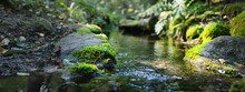 Small River (stream) In The Dark Evergreen Forest. Crystal Clear Water, Rocks, Moss, Fern, Plants Close-up. Natural Textures. Atmospheric Landscape. Pure Nature, Environment, Ecology