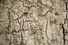 Old Wood Cracked Texture, Seamless Tree Bark Texture, Endless Wooden Background For Web Page Fill Or Graphic Design.