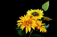Sunflowers On A Black Background. Three Artificial Flowers Of A Sunflower With Leaves And Stems.