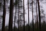 Fototapeta Fototapety do łazienki - pijany las