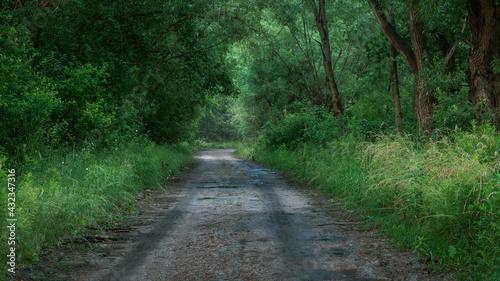 Fotografie, Obraz droga gruntowa po deszczu wsród zieleni