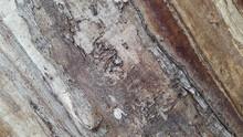 Old Rotted Wood Surface. Wooden Vintage Hedgehog Background