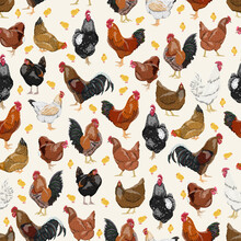 Seamless Pattern With Domestic Hens, Roosters And Chickens Of Different Colors And Breeds. Realistic Domestic Vector Birds Gallus Gallus Domesticus.