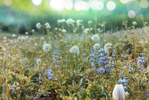 Sunny meadow - fototapety na wymiar