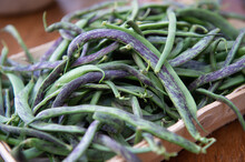 Coral Green Beans Typical Of The Albenga Area On The Western Coast Of Liguria