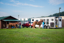 Two Brown Horses Stand Tied To Horse Trailer Waiting To Go On A Trail Rider Equestrian Green Grass Pasture Farm Country Riding