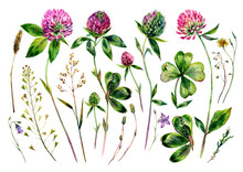 Watercolor Illustration Of Clover Flowers And Leaves