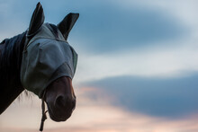 What Wearing A Mask Feels Like During Covid Horse Wearing Fly Mask During A Beautiful Sunset