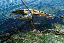 A Shipwrecked Sailboat Washed Up On A Remote Island In The San Juan Islands