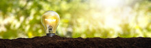 Lit Light Bulb Planted In The Earth - Concept Of Caring For The Environment And Sustainable Energy