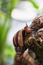 Snail On Tree Bark