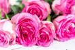Leinwandbild Motiv Pink roses