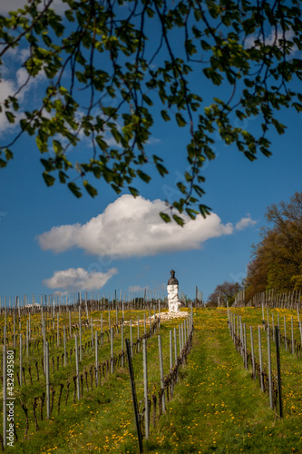 Fototapeta Winnica Bielany pomnik św. Marcina obraz