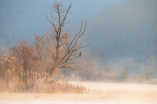 Beautiful Morning Rising Light On Withered Tree. Bird Perched On A Branch. Foggy Sunrise Lake Landscape.
