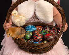 Hands Of A Little Girl Holding A Basket With Two Chicks And Decorated Easter Eggs.