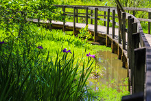A Shot Of A Brown Wooden Bridge Over The Water In A Marsh Surrounded By Lush Green Trees And Plants Over Silky Brown Water At Newman Wetlands Center In Hampton Georgia