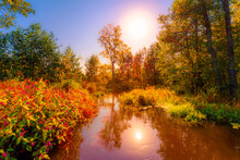 Stream Flowing Through The Colorful Autumn Forest On A Sunny And Clear Day