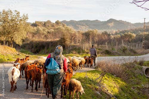 Fotografie, Tablou Two villagers are bringing the herd back from grazing at the end of the day