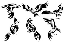 Set Of Six Vector Images Of Various Birds Such As Eagle Hawk Pheasant And Spigot Bulbul  Good Use For Symbol Mascot Icon Avatar And Logo