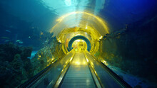 Underwater Aquarium Tunnel