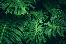Green Tropical Leaves Background. Summer And Nature Concept.