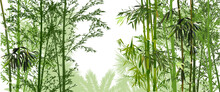 Green Bamboo And Palm Forest On White